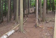 drvo drva šuma