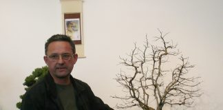 izložba bonsaist Adrian Horvat (1)