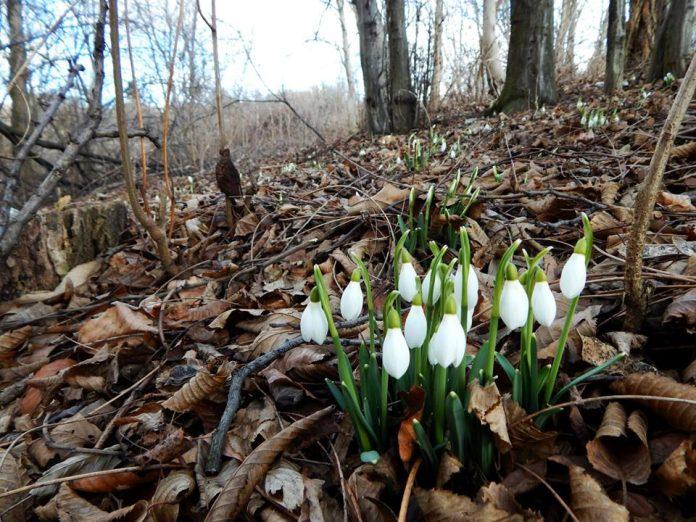visibabe proljeće