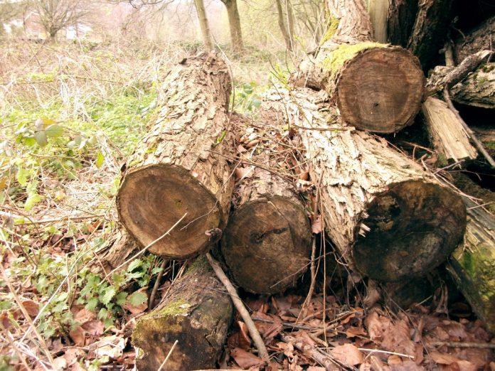 drvo drva