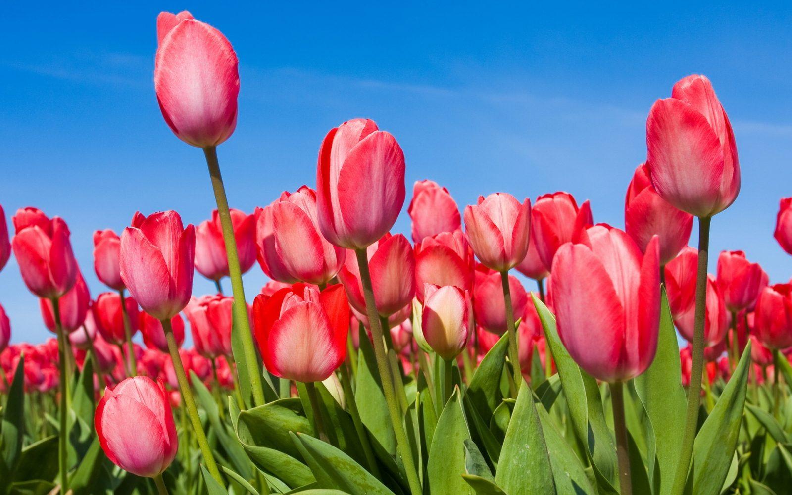 omiljeni cvijet Ana Rukavine