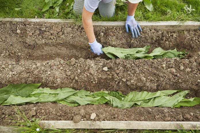 biodinamičko vrtlarstvo