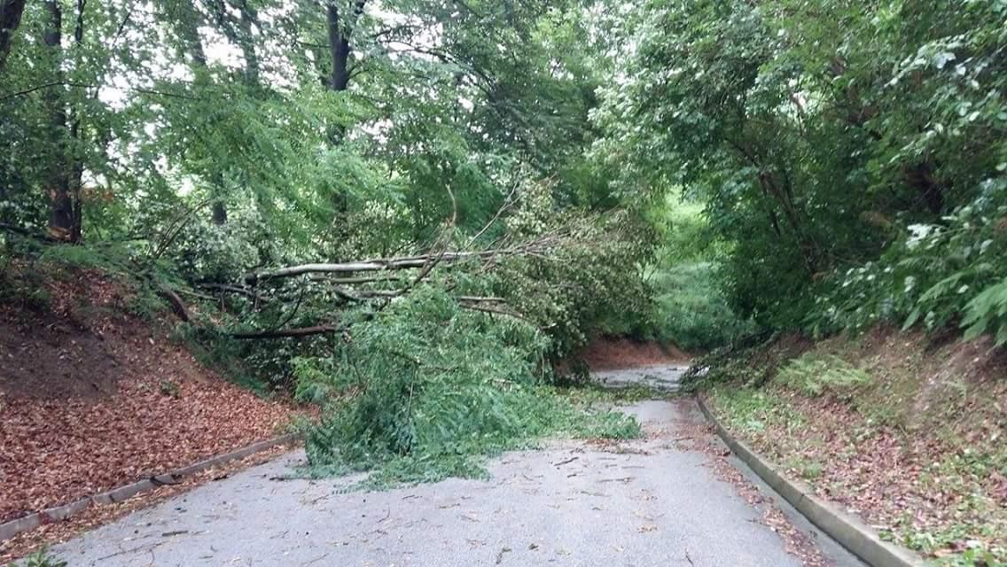 Porušena stabla zakrčila su promet na dosta mjesta