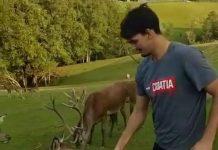Dario Šarić hrani jelenka