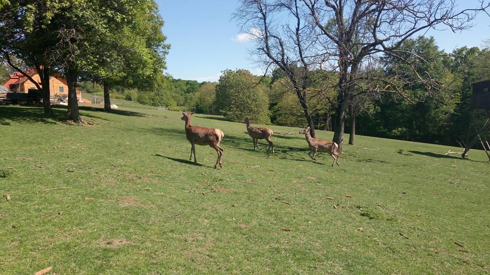 Farma jelena u Jurovčaku
