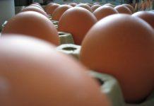 jaja jaje