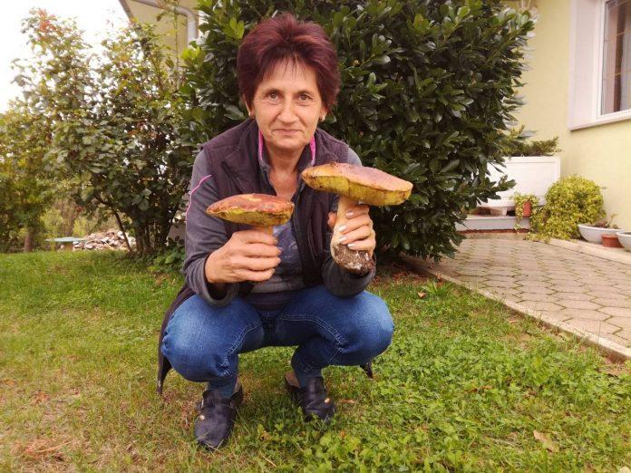 slasne gljive