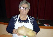 Dani kruha Belica