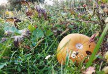 Jesen tikva