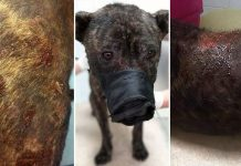 ranjeni pas