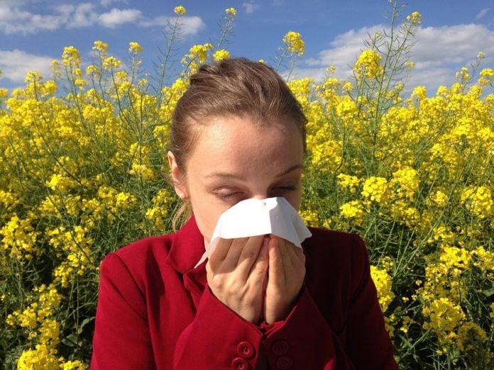 alergija pelud
