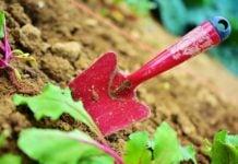 sadnja uzgoj poljoprivreda zemlja vrt