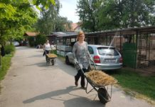Više od sedamdesetak vrijednih volontera priprema teren za romske pse u skloništu
