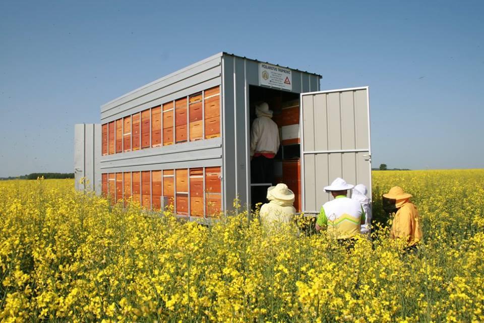 Sljedeći vikend skup pčelara i dva predavanja stručnjaka u Murskom Središću