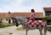 Marcela Mesarić konj