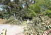 Rušenje stabla Perivoj Zrinskih1