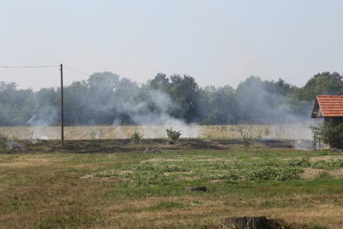 požar nasad lješnjaka Belica1