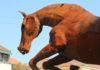 skulptura konj cakovec (1)