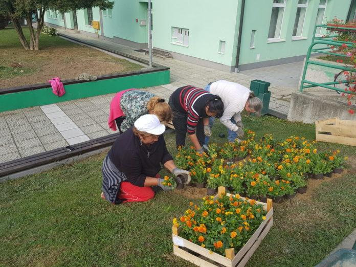 Sadnja cvijeća Mursko Središće