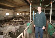 uzgajivači svinja