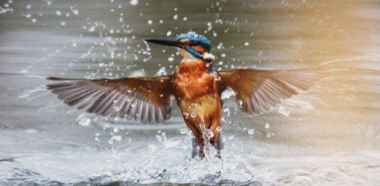 Strucni skup - Turizam promatranja ptica (3)