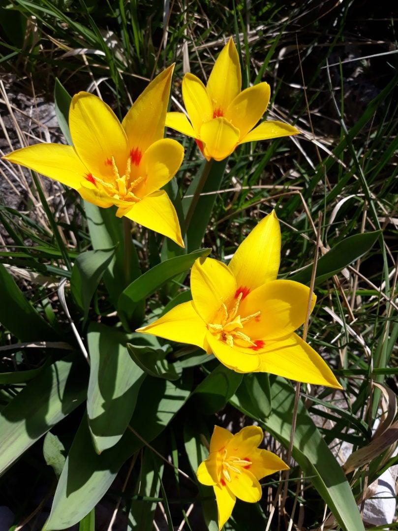 Besplatni video proljeće