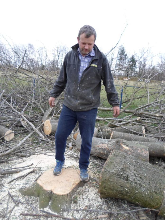 rušenje stabala u svetom križu
