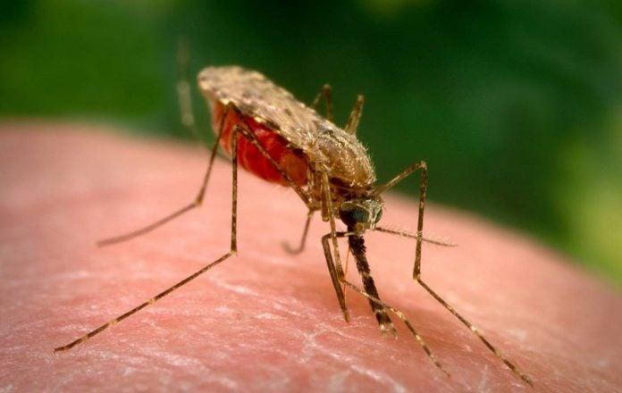 komarac-komarci