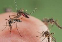 zaprasivanje komaraca