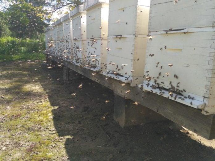 Dražen Bogdan pčelarstvo (2)