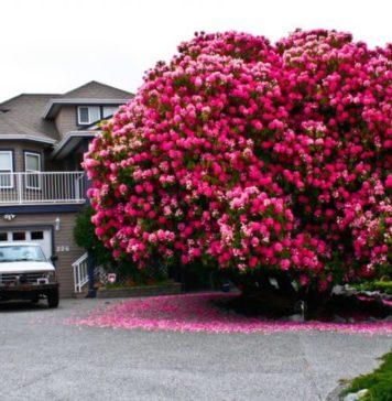 najljepša-stabla-810x522