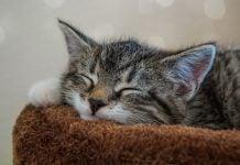 cat-4592279_960_720
