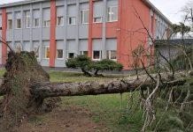 porušeno stablo ekonomska škola čakovec