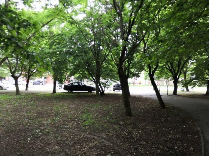 auto u parku