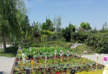 vrtni centar iva