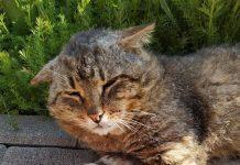mačka za udomljavanje