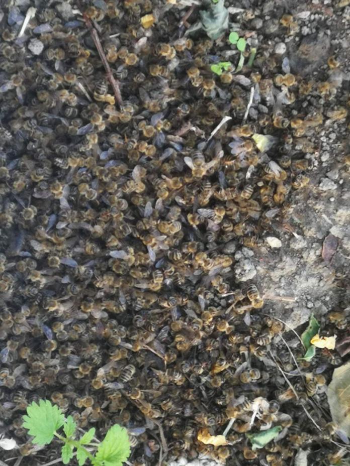 pomor pčela2