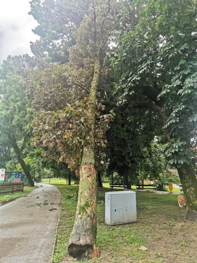 o stablo u čakovečkom parku