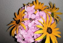 hortenzija