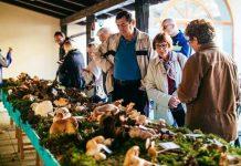 izložba gljiva Jesen u gradu Zrinskih 1