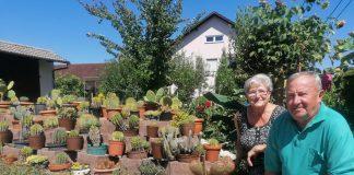 juras orehovica kaktusi