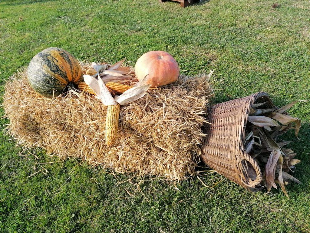 pozdrav jeseni gornji mihaljevec