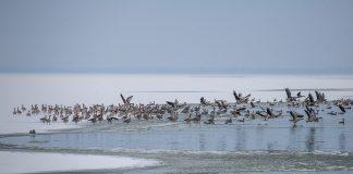 ptice na zimovanju foto Davorin Mance (1)