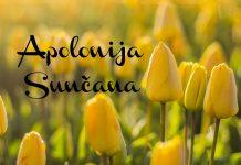 apolonija sunčana
