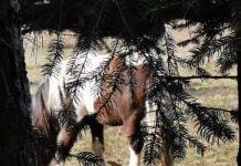 konjska kopita šuma Čep (6)_resize