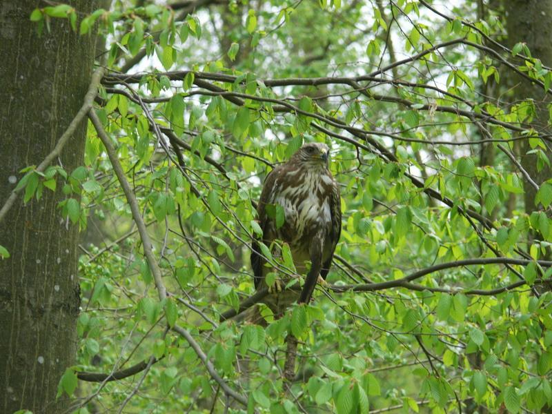 puštanje ptica (4)