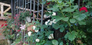 vrt i cvijeće