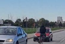 Vrludao po cesti među automobilima